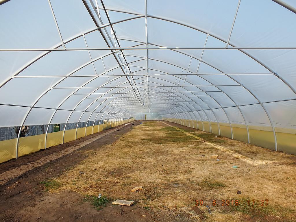 Шпалеры в фермерской промышленной теплице расположены на каждой арке