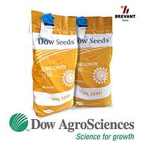 Насiння соняшника 8Н421КЛДМ Dow Seeds (Дау Сидс)