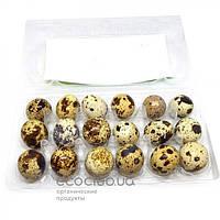 Яйца перепелиные фермерские 18шт.