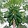 Папайя Дынное дерево, 3шт., фото 4
