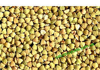 Гречка зеленая, ОРГАНИЧЕСКАЯ, 1 кг (ядрица. для проращивания)