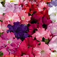 Семена Петуния крупноцветковая Аладдин F1 Смесь Mix 500 семян Benary
