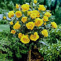Роза штамбовая Landora
