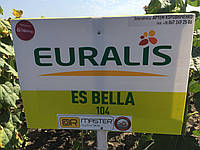 Белла Евралис 2017 экстра семена подсолнечника один из лидеров по урожайности и засухоустойчивости
