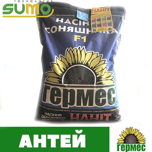 Семена подсолнечника гибрид Антей (экстра)