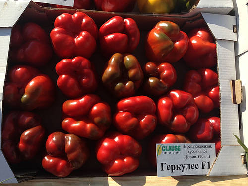 Семена перца Геркулес F1 \ Hercules F1 5 грамм Clause