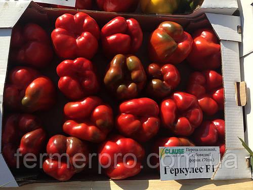 Семена перца Геркулес F1 \ Hercules F1 50 грамм Clause