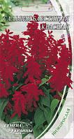 Сальвия блестящая Красный гном