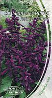 Сальвия блестящая фиолетовая