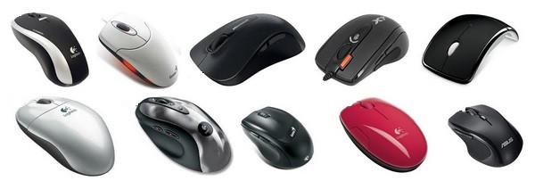 Мышки, мыши.