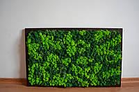 Картина из стабилизированного мха разных оттенков в раме из дерева, фото 1