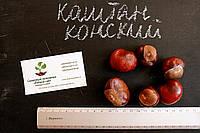 Каштан конский семена (10шт) для выращивания саженцев насіння для саджанців + инструкция