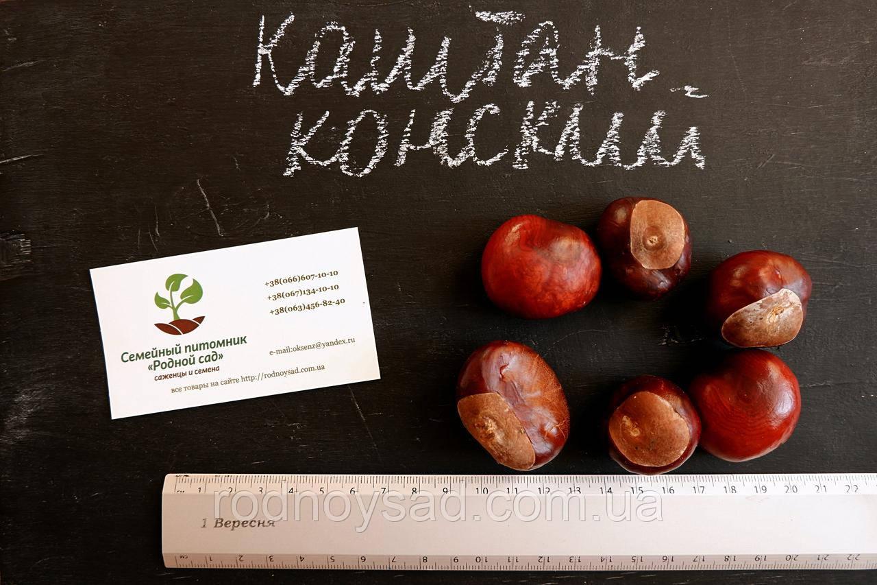 Каштан конский семена (10шт) для выращивания саженцев насіння для садж