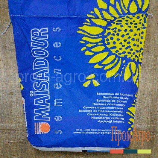Семена подсолнечника Maisadour MAS 80IR под Евролайтинг посевной гибрид подсолнуха Майсадур МАС 80ИР