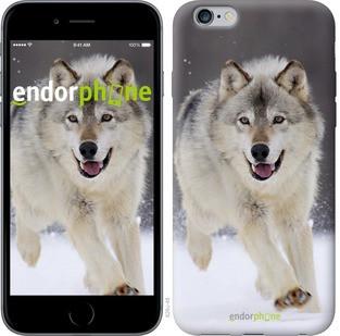 """Чехол на iPhone 6 Plus Бегущий волк """"826c-48-571"""""""
