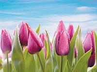 Фотообои, тюльпаны, небо, ПРЕСТИЖ №11 272смХ196см