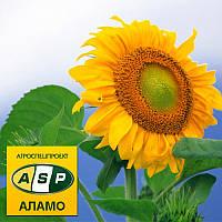 Соняшник Аламо F1