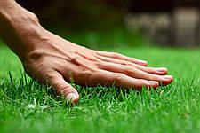 Як створити та доглядати за газоном.