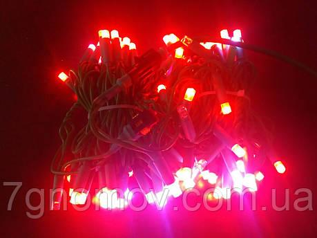 Гірлянда світлодіодна Flash-String зелений кабель червоний з холодним білим флешем 10м 100 діодів 220В, фото 2