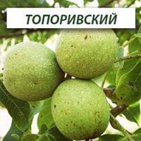 Грецкий орех Топоривский, однолетний
