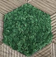 Стабилизированный мох оптом для фитостен  Grass Green Norske Moseprodukter AS, фото 2