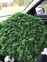 Стабилизированный мох оптом для фитостен  Grass Green Norske Moseprodukter AS, фото 4