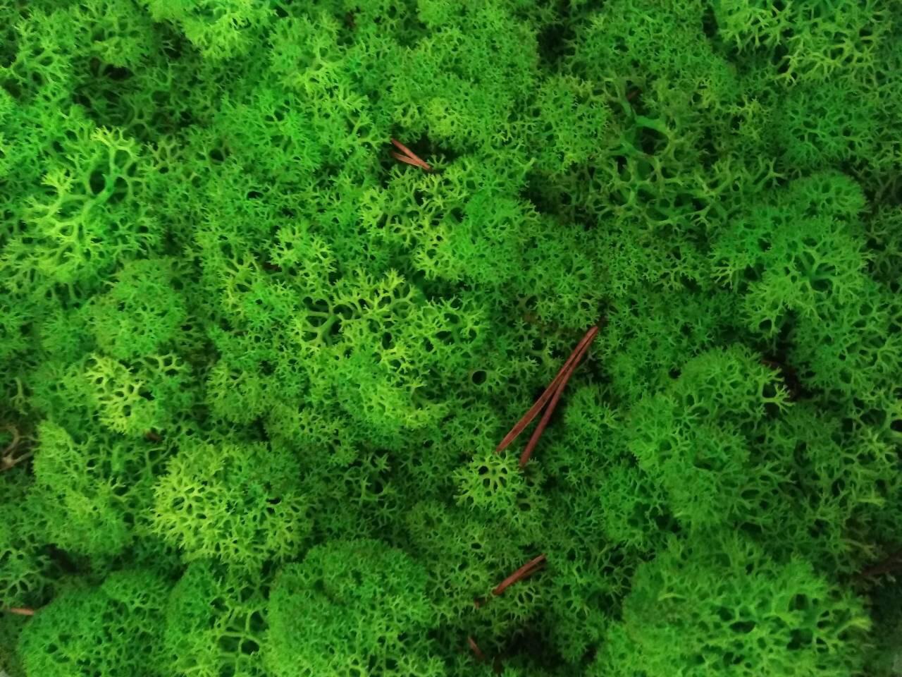 Стабилизированный мох оптом для фитостен  Grass Green Light Norske Moseprodukter AS