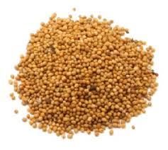 Семена Горчицы желтой  1 кг