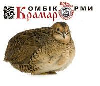 Комбикорм Крамар для взрослых перепелов 25 кг