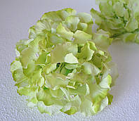Головка гортензії салатова велика