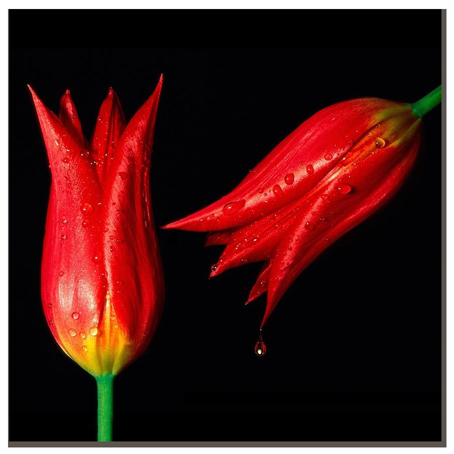"""Картина на стекле """" Тюльпаны и роса"""""""