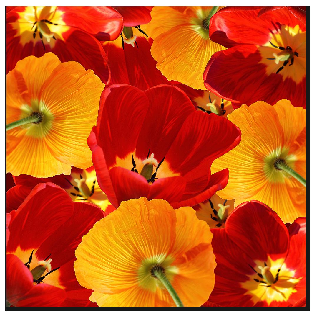 """Картина на стекле """" Красные и оранжевые тюльпаны"""""""