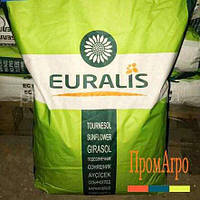 Семена подсолнечника, Euralis, ЕС ФЛОРИМИС, под Евролайтинг