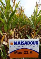 Насіння кукурудзи  Mas 23.K ФАО 220 ( Maisadour Semences)
