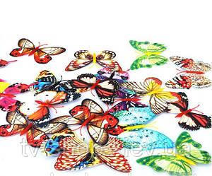 Бабочка на магните