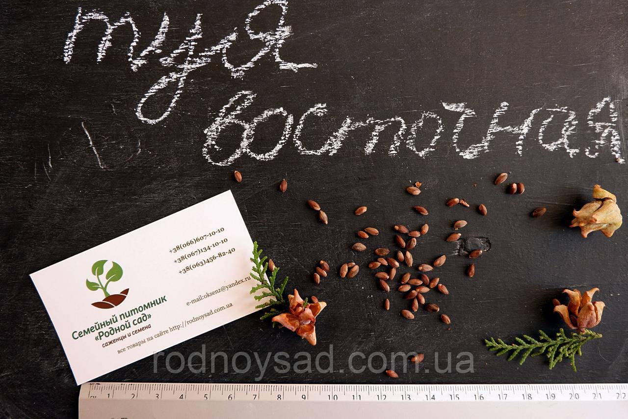 Туя восточная семена (10шт) (плосковеточник, биота, Platýcladus) семечки для саженцев насіння для саджанців