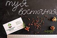 Туя восточная семена (10шт) (плосковеточник, биота) семечки для саженцев насіння для саджанців