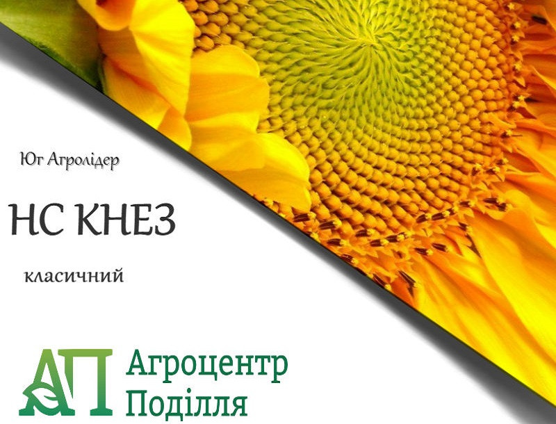 Семена подсолнечника НС КНЕЗ 107-110 дн. (стойкий к заразихе A-G+)