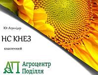 Семена подсолнечника НС КНЕЗ 107-110 дн. (новинка 2018г.! устойчевый к 7 расам заразихи A-G+)