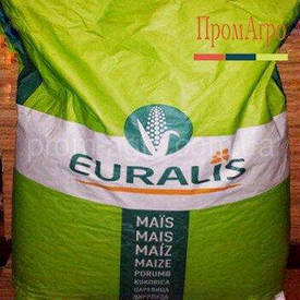 Насіння кукурудзи, Євраліс, ЄС Сенсор, ФАО 370