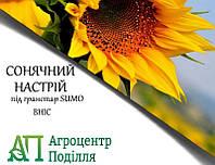 Насіння соняшнику під гранстар 50 г! СОНЯЧНИЙ НАСТРІЙ 115 дн. ВНІС (безкоштовна доставка)