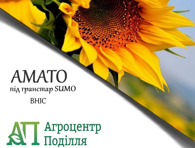 Семена подсолнечника под гранстар Амато 110 дн.