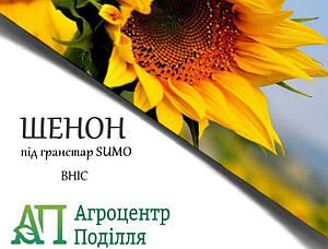 Семена подсолнечника под гранстар Шенон 110 дн. устойчевый к 7 расам заразихи (новинка 2018 г.!)