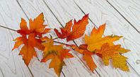 Листья клена осенние Премиум
