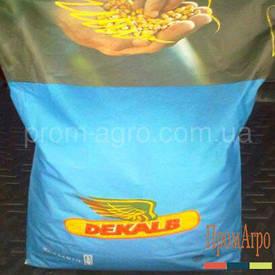Семена кукурузы Monsanto ДКС 3415 ФАО 260 посевной гибрид кукурудзи Монсанто ДКС 3415
