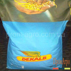 Семена кукурузы Monsanto ДКС 3711 ФАО 280 посевной гибрид кукурудзи Монсанто ДКС 3711