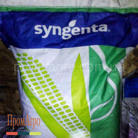 Семена кукурузы Syngenta НК Люциус ФАО 340 посевной гибрид кукурудзы Сингента НК Люциус