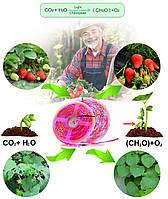 Фитолента для растений 3red +1blue SMD 5050  300Led 60шт/м  12в  IP65  5м, фото 5