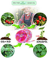 Фитолента для растений 4red +1blue  SMD 5050  300Led 60шт/м  12в  IP65 5м, фото 7