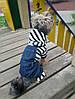 """Комбинезон, костюм  с кофтой """"Морячок"""" для собаки. Одежда для собаки, фото 6"""